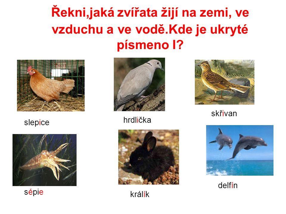 Řekni,jaká zvířata žijí na zemi, ve vzduchu a ve vodě.Kde je ukryté písmeno I? slepice králík skřivan delfín hrdlička sépie