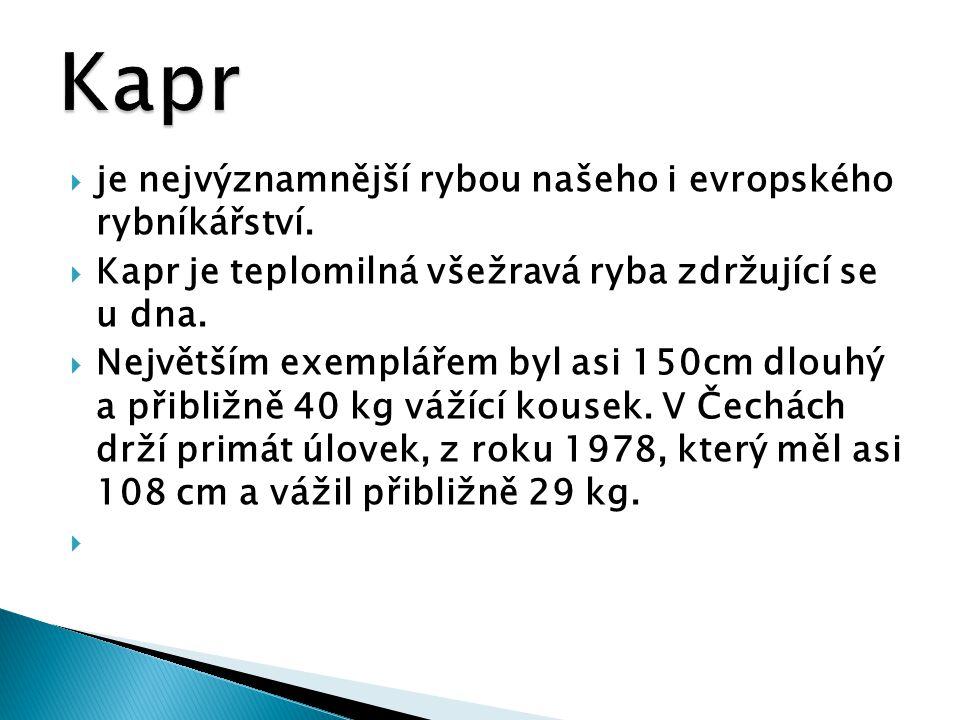  je nejvýznamnější rybou našeho i evropského rybníkářství.  Kapr je teplomilná všežravá ryba zdržující se u dna.  Největším exemplářem byl asi 150c