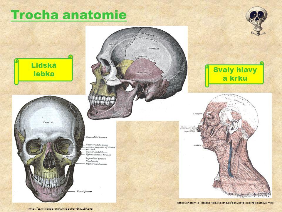 Trocha anatomie http://anatomie-lidskeho-tela.kvalitne.cz/pohybova-operna-soustava.html http://cs.wikipedia.org/wiki/Soubor:Gray190.png Svaly hlavy a krku Lidská lebka