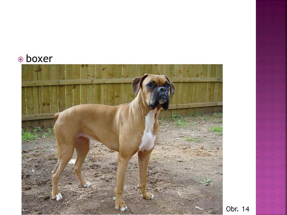  boxer Obr. 14