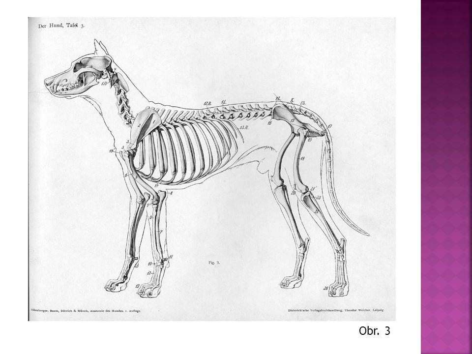 5) KONČETINY - drápy, které nezatahuje (X kočka) 6) VNITŘNÍ SOUSTAVY a) dýchací b) oběhová c) trávicí d) vylučovací e) nervová f) rozmnožovací Obr.