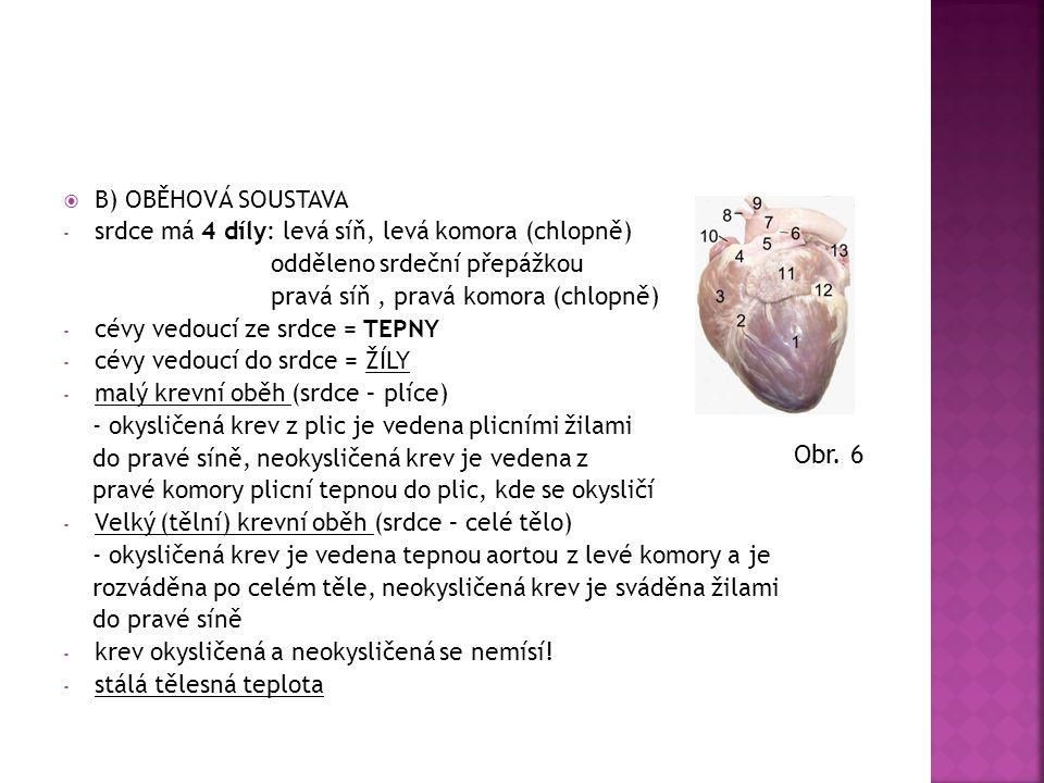 B) OBĚHOVÁ SOUSTAVA - srdce má 4 díly: levá síň, levá komora (chlopně) odděleno srdeční přepážkou pravá síň, pravá komora (chlopně) - cévy vedoucí z