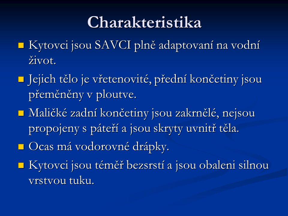 Charakteristika Kytovci jsou SAVCI plně adaptovaní na vodní život. Kytovci jsou SAVCI plně adaptovaní na vodní život. Jejich tělo je vřetenovité, před