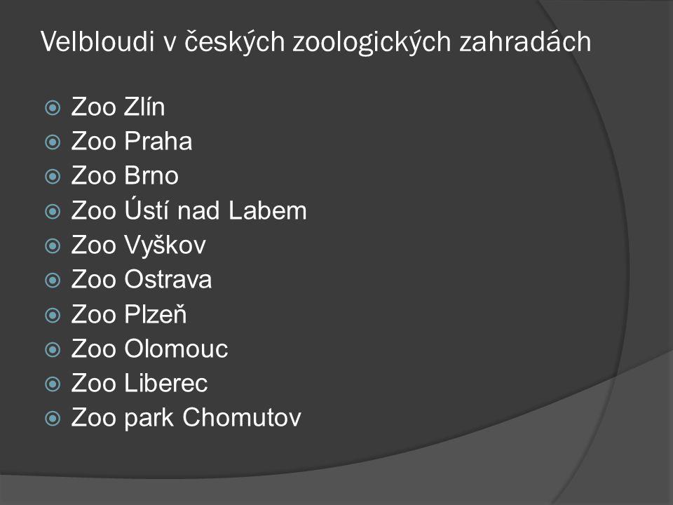 Velbloudi v českých zoologických zahradách  Zoo Zlín  Zoo Praha  Zoo Brno  Zoo Ústí nad Labem  Zoo Vyškov  Zoo Ostrava  Zoo Plzeň  Zoo Olomouc  Zoo Liberec  Zoo park Chomutov