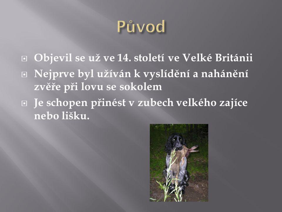  Anglický špringršpaněl je plemenem loveckých psů.