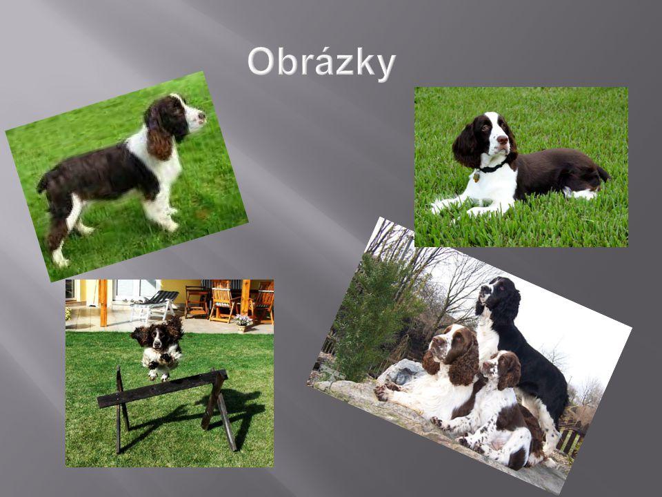  Náš pes se jmenuje Betty  Její oblíbenou činností je ležení  Když jde o povely tak jedině s jídlem