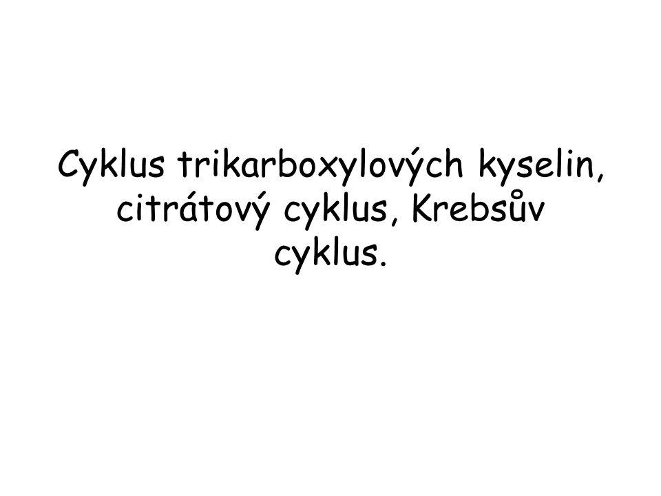 Citrátsynthasa Citrátsynthasa katalyzuje kondenzaci acetylCoA s oxaloacetátem.