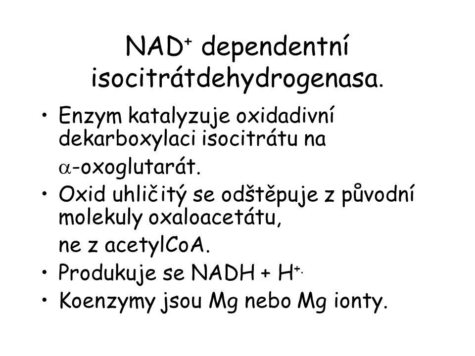 NAD + dependentní isocitrátdehydrogenasa.