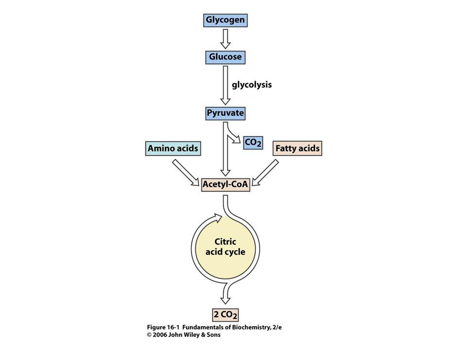 SukcinylCoAsynthetasa (sukcinátthiokinasa) Katalyzuje štěpení vazby s vysokou energií (sukcinylCoA) spojené se syntézou GTP.