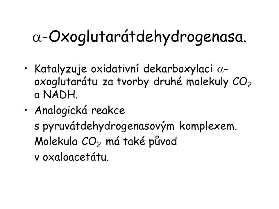  -Oxoglutarátdehydrogenasa.