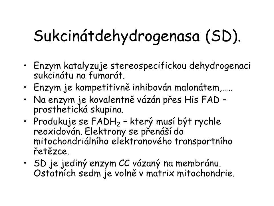 Sukcinátdehydrogenasa (SD).Enzym katalyzuje stereospecifickou dehydrogenaci sukcinátu na fumarát.