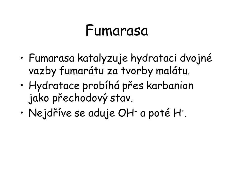 Fumarasa Fumarasa katalyzuje hydrataci dvojné vazby fumarátu za tvorby malátu.
