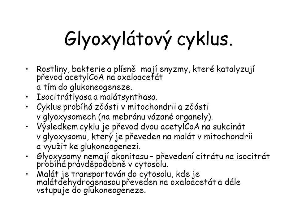 Glyoxylátový cyklus.