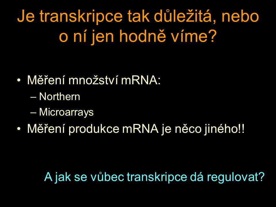 Je transkripce tak důležitá, nebo o ní jen hodně víme.