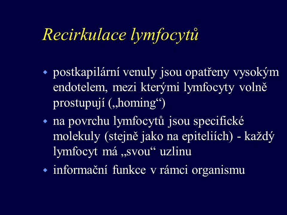"""Recirkulace lymfocytů w postkapilární venuly jsou opatřeny vysokým endotelem, mezi kterými lymfocyty volně prostupují (""""homing"""") w na povrchu lymfocyt"""