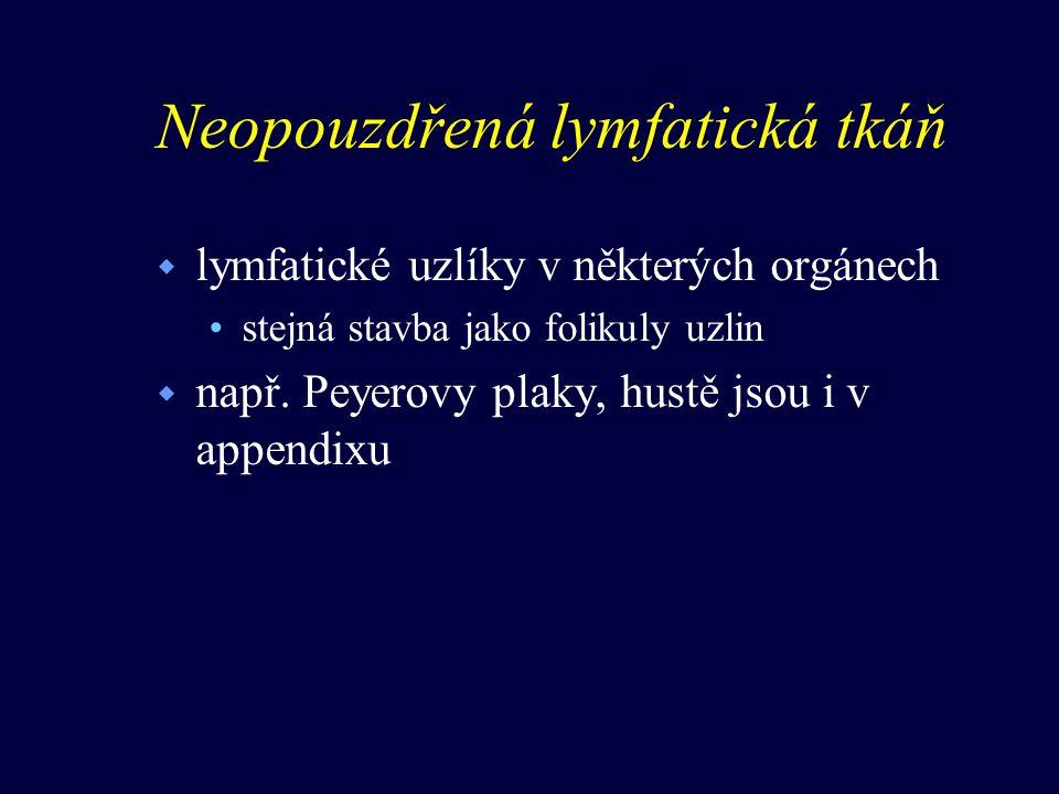 Neopouzdřená lymfatická tkáň w lymfatické uzlíky v některých orgánech stejná stavba jako folikuly uzlin w např. Peyerovy plaky, hustě jsou i v appendi