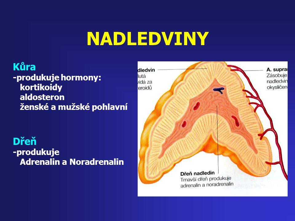 NADLEDVINY Kůra -produkuje hormony: kortikoidy aldosteron ženské a mužské pohlavní Dřeň -produkuje Adrenalin a Noradrenalin