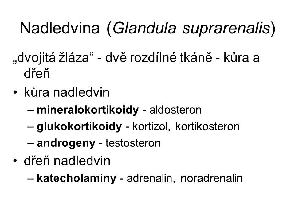 """Nadledvina (Glandula suprarenalis) """"dvojitá žláza - dvě rozdílné tkáně - kůra a dřeň kůra nadledvin –mineralokortikoidy - aldosteron –glukokortikoidy - kortizol, kortikosteron –androgeny - testosteron dřeň nadledvin –katecholaminy - adrenalin, noradrenalin"""