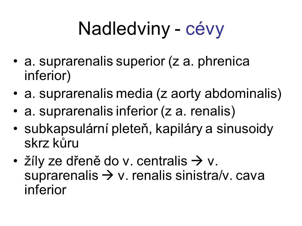 Nadledviny - cévy a. suprarenalis superior (z a. phrenica inferior) a. suprarenalis media (z aorty abdominalis) a. suprarenalis inferior (z a. renalis