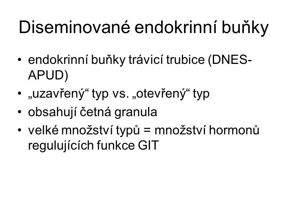 """Diseminované endokrinní buňky endokrinní buňky trávicí trubice (DNES- APUD) """"uzavřený"""" typ vs. """"otevřený"""" typ obsahují četná granula velké množství ty"""