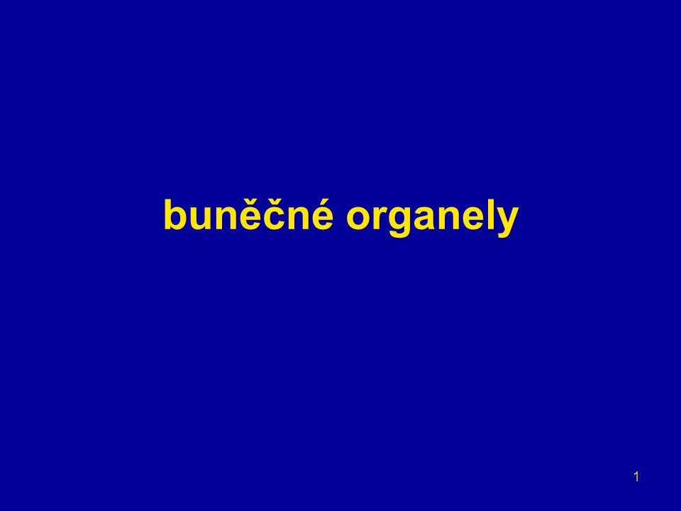 12 buněčné organely jadérko = oblast jádra (chromozomů) kódující rRNA jaderný obal –dvojitá membrána → ER, jaderná lamina –jaderné póry proteiny a vlákna → jaderný koš spotřeba GTP nukleoplasma