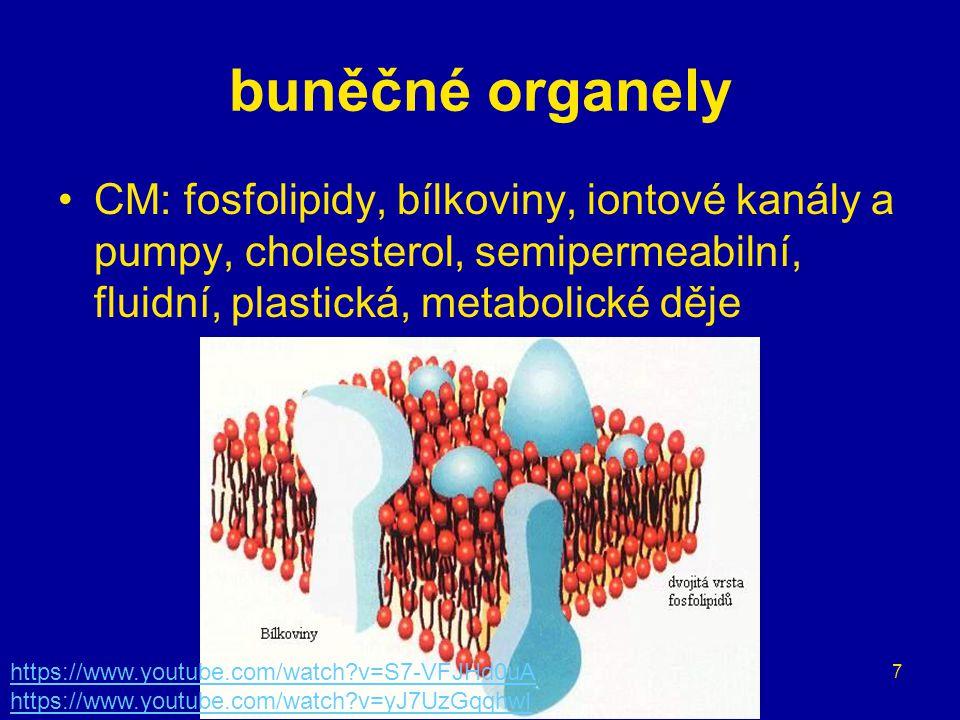 7 buněčné organely CM: fosfolipidy, bílkoviny, iontové kanály a pumpy, cholesterol, semipermeabilní, fluidní, plastická, metabolické děje https://www.