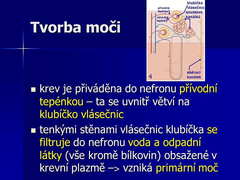 Tvorba moči krev je přiváděna do nefronu přívodní tepénkou – ta se uvnitř větví na klubíčko vlásečnic krev je přiváděna do nefronu přívodní tepénkou –