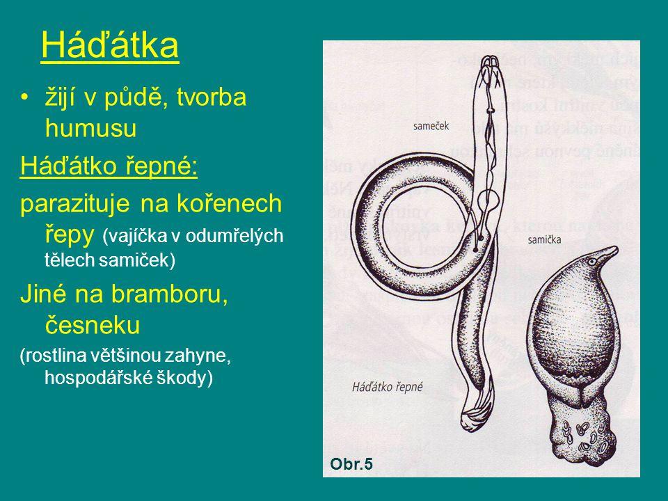 Háďátka žijí v půdě, tvorba humusu Háďátko řepné: parazituje na kořenech řepy (vajíčka v odumřelých tělech samiček) Jiné na bramboru, česneku (rostlin