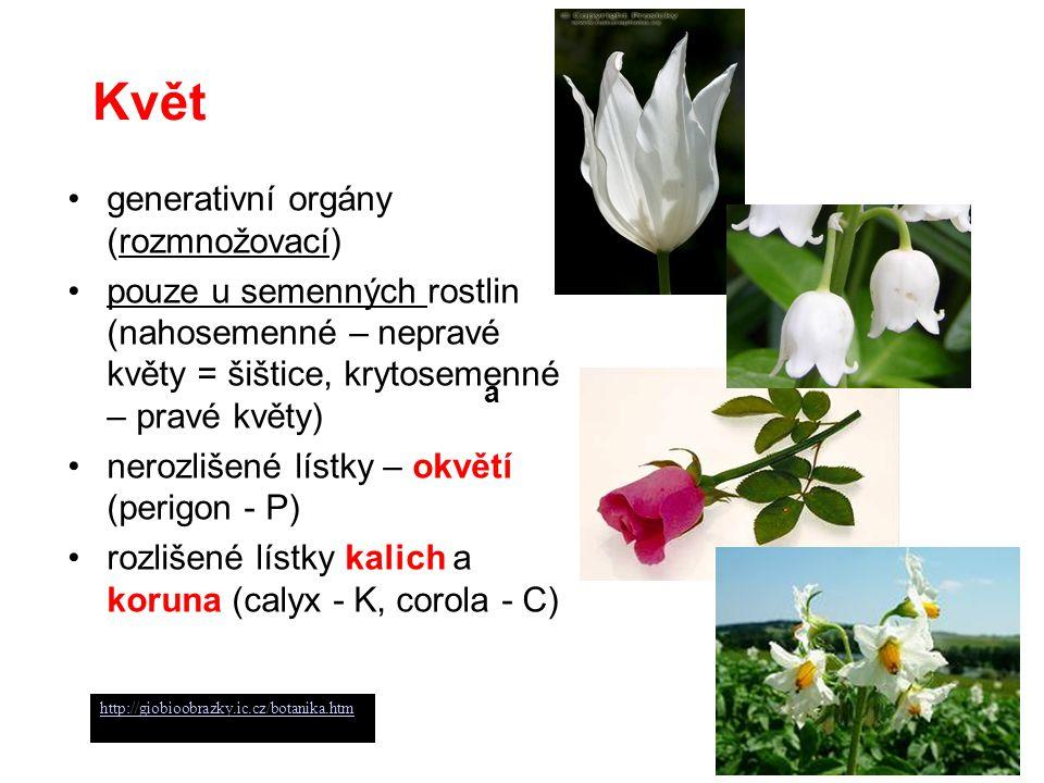 Květ generativní orgány (rozmnožovací) pouze u semenných rostlin (nahosemenné – nepravé květy = šištice, krytosemenné – pravé květy) nerozlišené lístk