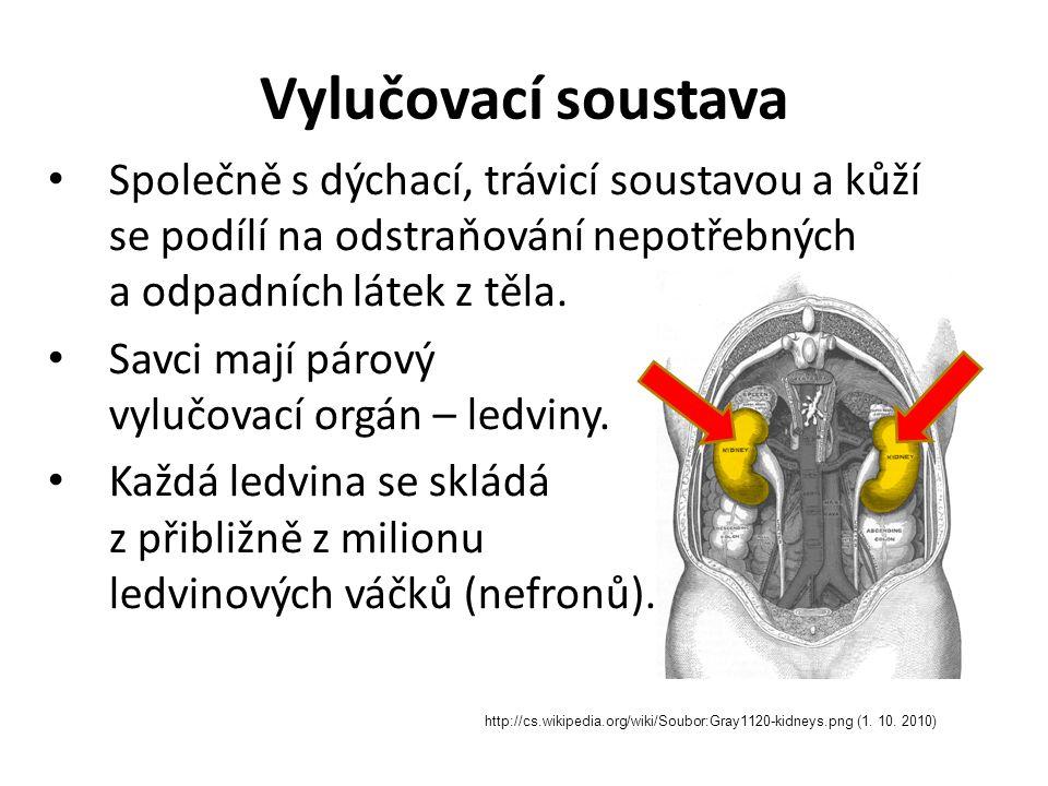Popis vylučovací soustavy http://cs.wikipedia.org/wiki/Soubor:Illu_urinary_system.jpg (1.