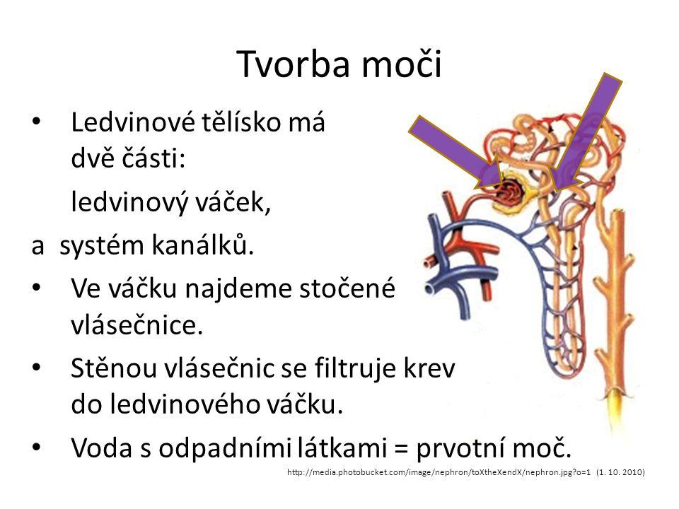 Tvorba moči http://media.photobucket.com/image/nephron/toXtheXendX/nephron.jpg?o=1 (1. 10. 2010) Ledvinové tělísko má dvě části: ledvinový váček, a sy