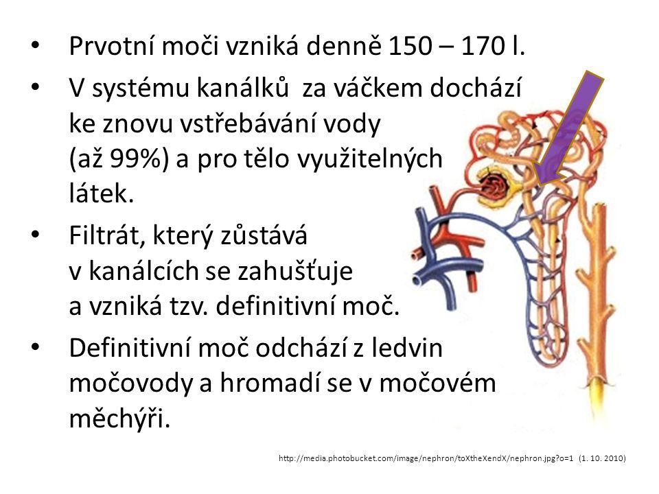 http://media.photobucket.com/image/nephron/toXtheXendX/nephron.jpg?o=1 (1. 10. 2010) Prvotní moči vzniká denně 150 – 170 l. V systému kanálků za váčke