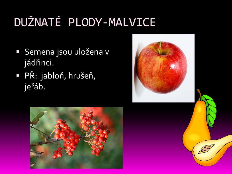 DUŽNATÉ PLODY-MALVICE  Semena jsou uložena v jádřinci.  PŘ: jabloň, hrušeň, jeřáb.