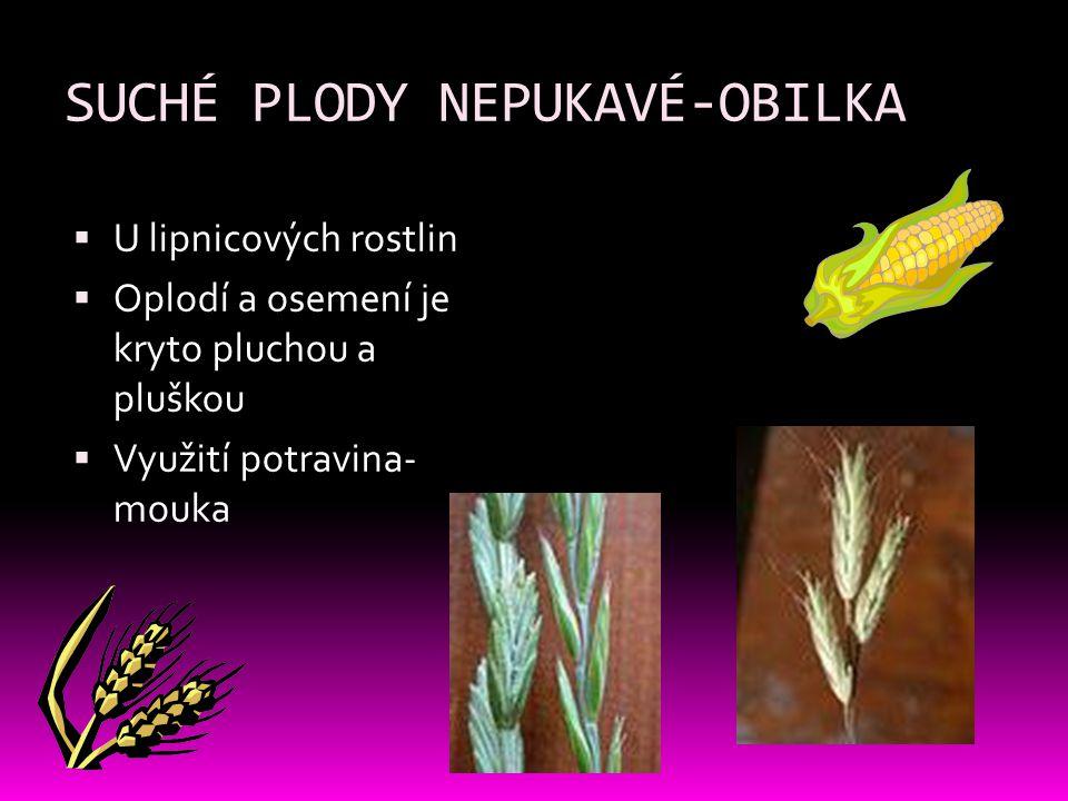 SUCHÉ PLODY NEPUKAVÉ-OBILKA  U lipnicových rostlin  Oplodí a osemení je kryto pluchou a pluškou  Využití potravina- mouka