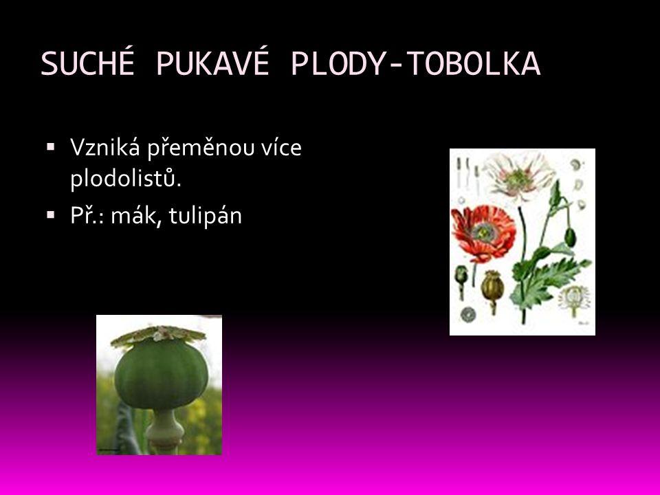SUCHÉ PUKAVÉ PLODY-TOBOLKA  Vzniká přeměnou více plodolistů.  Př.: mák, tulipán