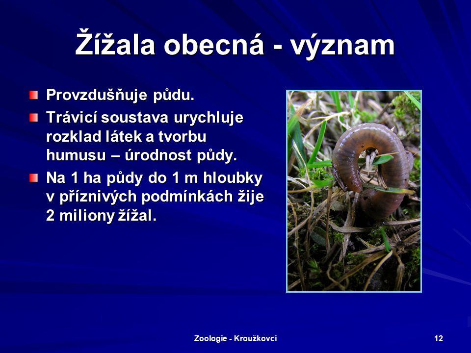 Zoologie - Kroužkovci 11 Zástupci Nítěnka větší Naidka chobotnatá Roupice Žížala obecná Žížala podhorská