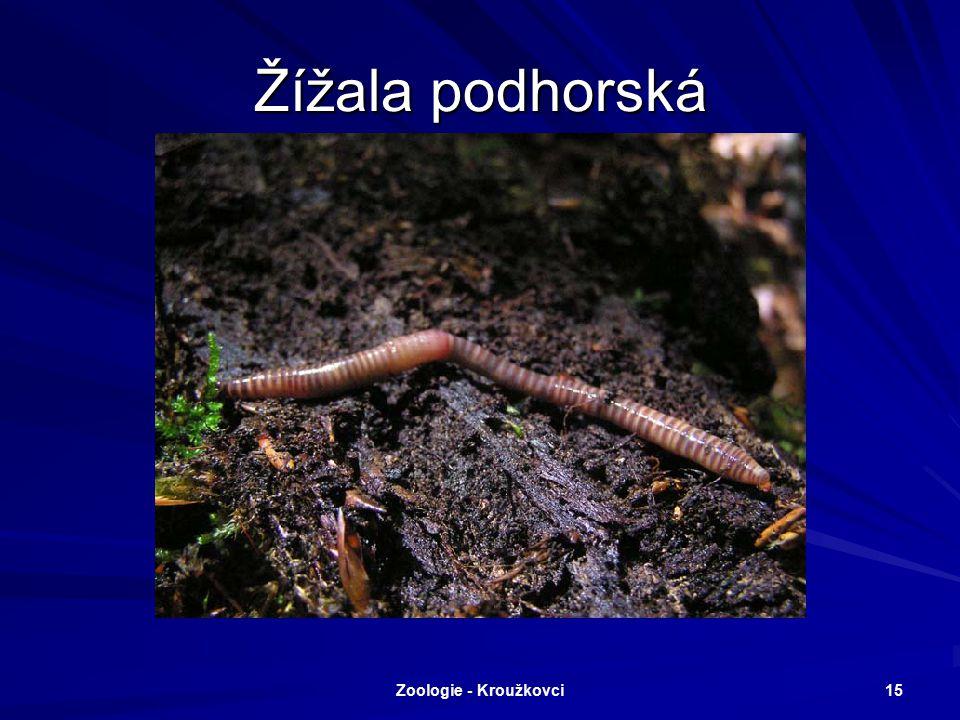 Zoologie - Kroužkovci 14 Nítěnky naidka
