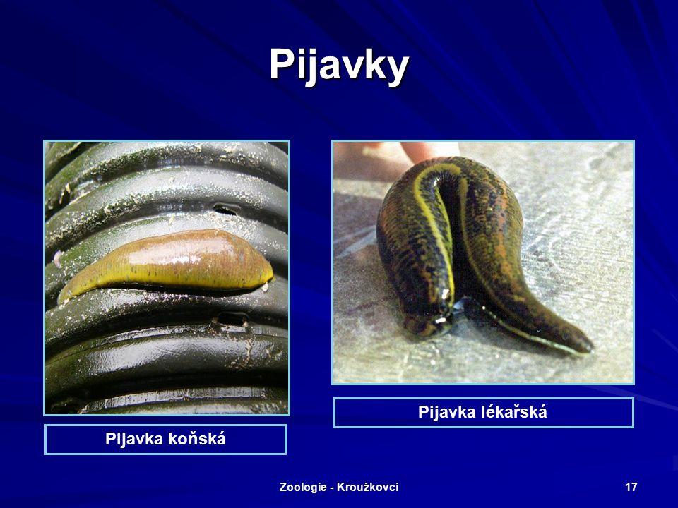Zoologie - Kroužkovci 16 Podtřída: Pijavice Sladkovodní i mořští kroužkovci bez parapodií s přísavnými jamkami kolem úst a na konci těla. Nestejnocenn