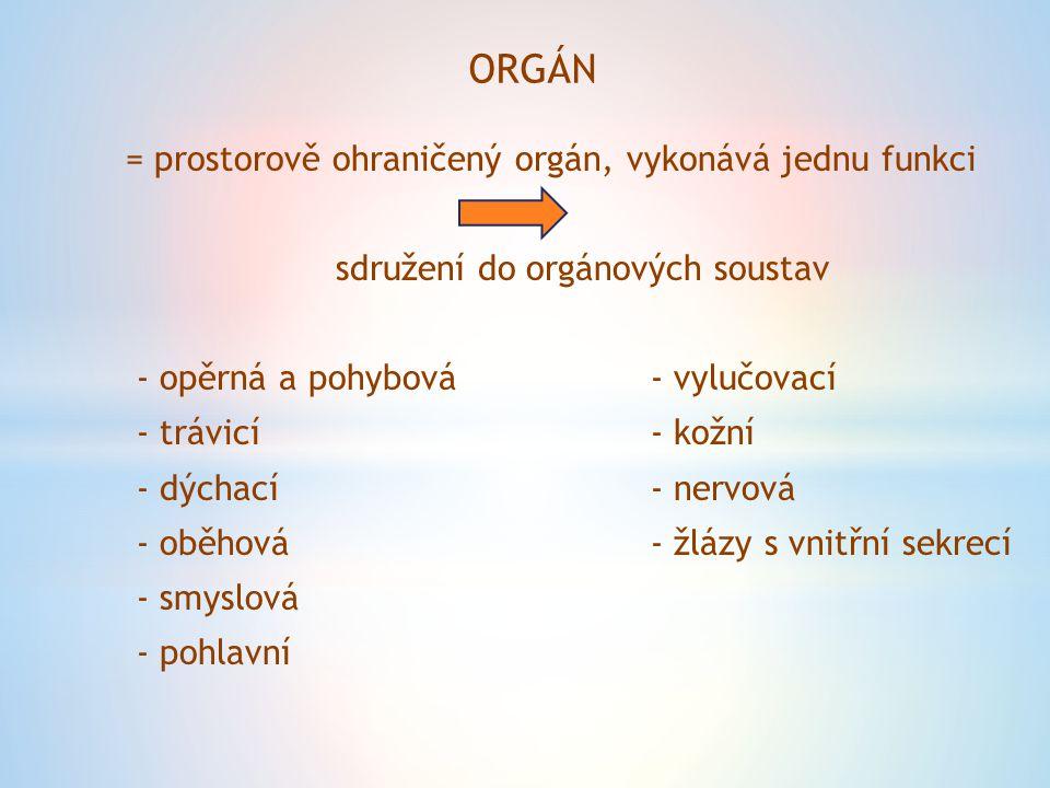 ORGÁN = prostorově ohraničený orgán, vykonává jednu funkci sdružení do orgánových soustav - opěrná a pohybová- vylučovací - trávicí- kožní - dýchací- nervová - oběhová- žlázy s vnitřní sekrecí - smyslová - pohlavní