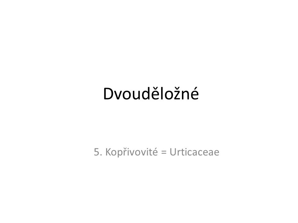 Dvouděložné 5. Kopřivovité = Urticaceae