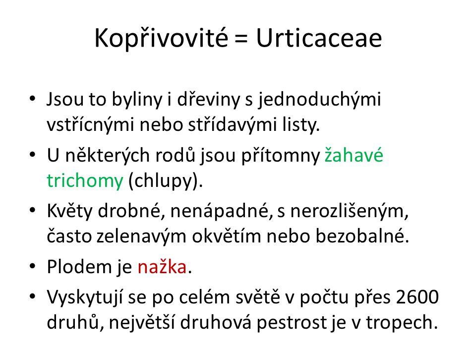Kopřivovité = Urticaceae Jsou to byliny i dřeviny s jednoduchými vstřícnými nebo střídavými listy.