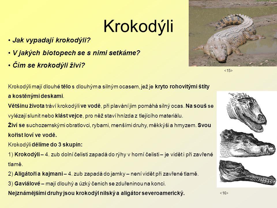 Krokodýli Jak vypadají krokodýli.V jakých biotopech se s nimi setkáme.