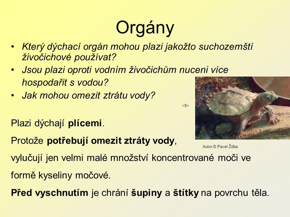 Orgány Který dýchací orgán mohou plazi jakožto suchozemští živočichové používat.