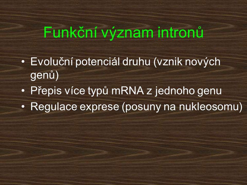 Funkční význam intronů Evoluční potenciál druhu (vznik nových genů) Přepis více typů mRNA z jednoho genu Regulace exprese (posuny na nukleosomu)