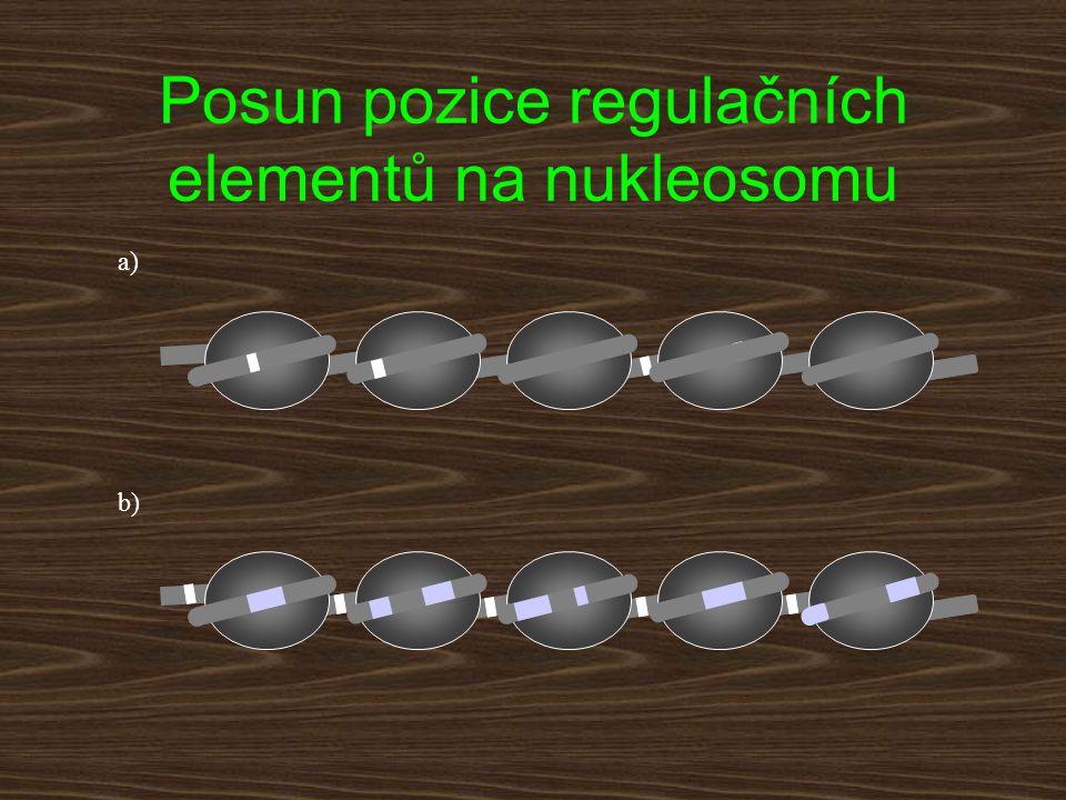 a) b) Posun pozice regulačních elementů na nukleosomu
