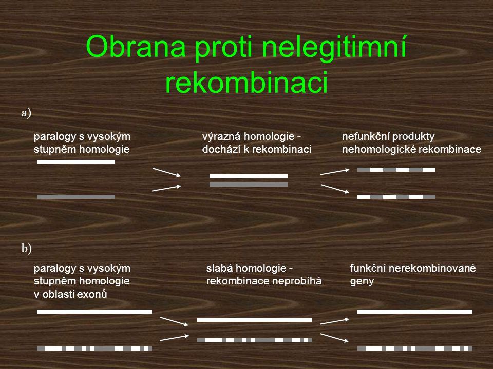 slabá homologie - rekombinace neprobíhá výrazná homologie - dochází k rekombinaci nefunkční produkty nehomologické rekombinace paralogy s vysokým stup