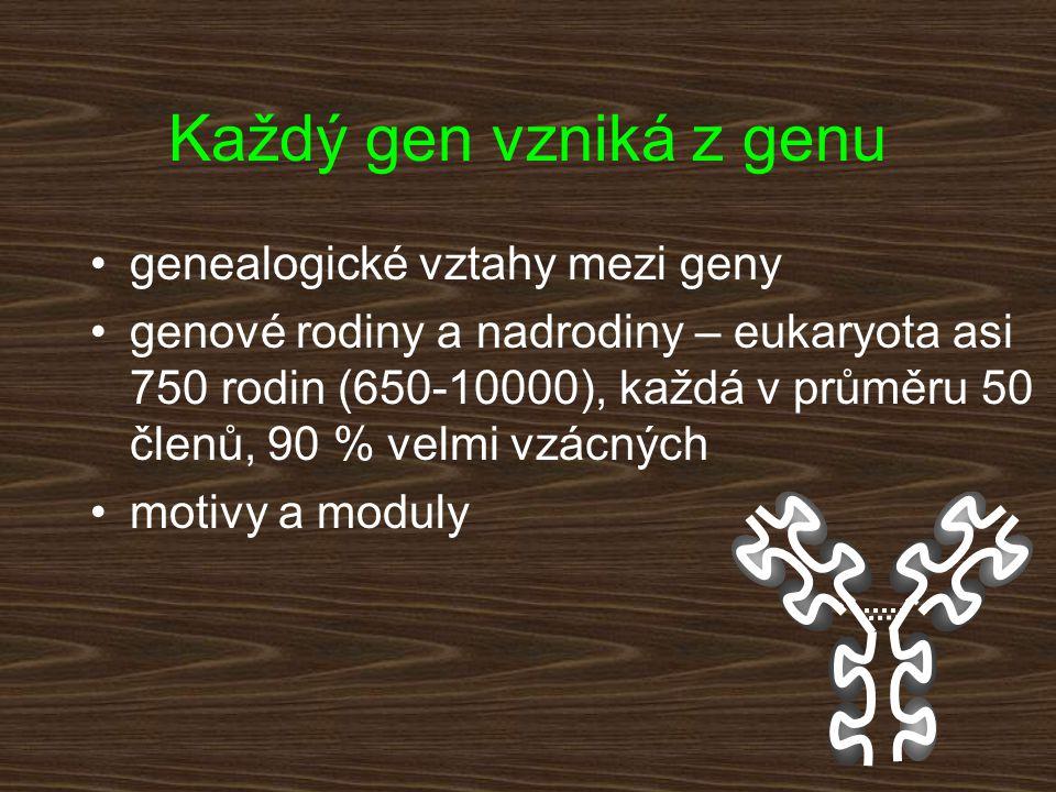 Každý gen vzniká z genu genealogické vztahy mezi geny genové rodiny a nadrodiny – eukaryota asi 750 rodin (650-10000), každá v průměru 50 členů, 90 %