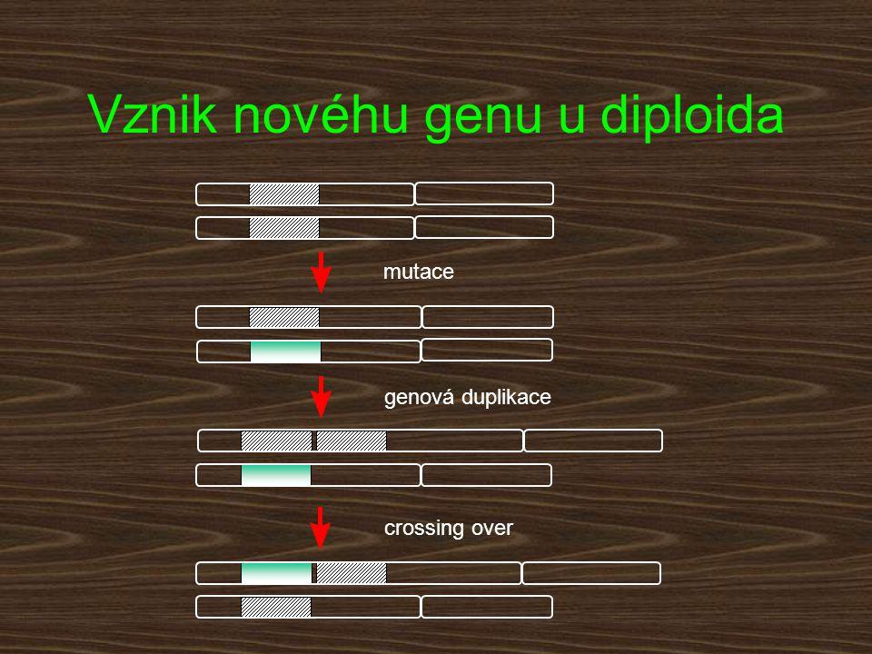 mutace genová duplikace crossing over Vznik novéhu genu u diploida