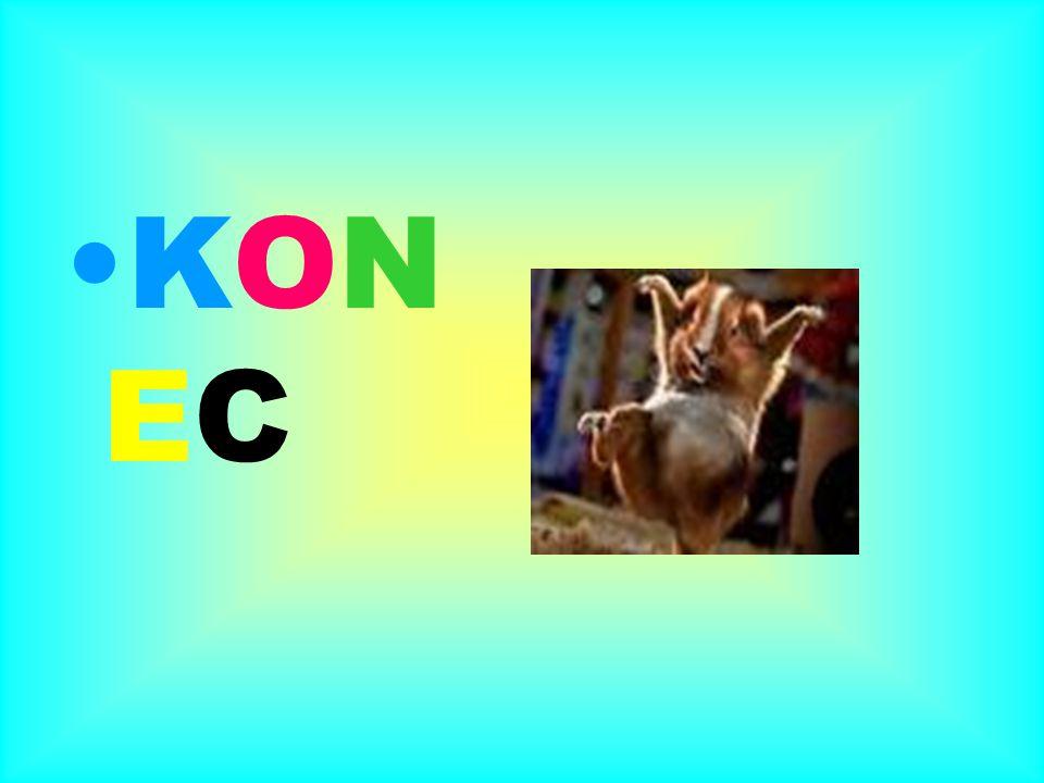 KON EC