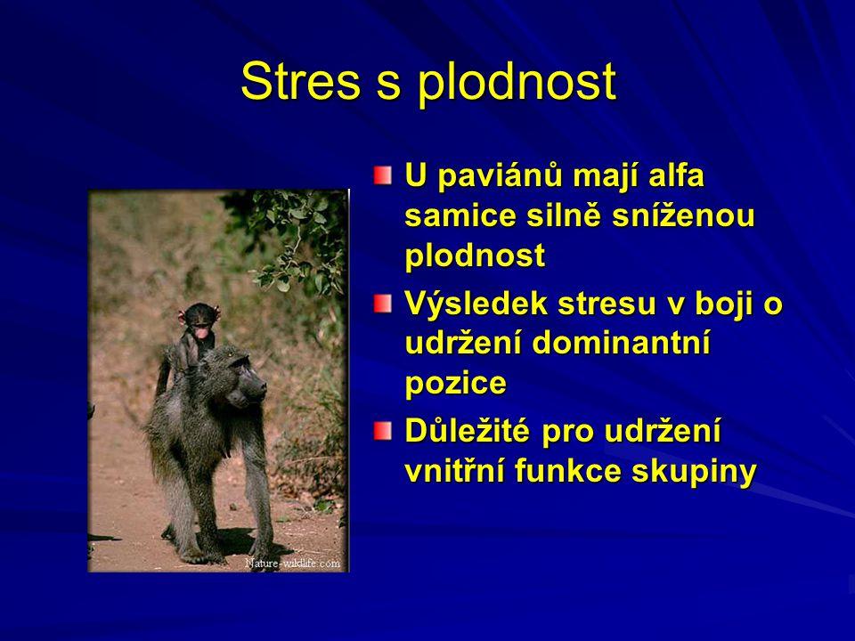 Stres s plodnost U paviánů mají alfa samice silně sníženou plodnost Výsledek stresu v boji o udržení dominantní pozice Důležité pro udržení vnitřní funkce skupiny